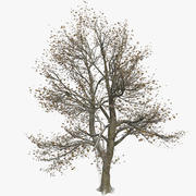 Frosty Partially Snow Covered Winter Tree With Leaves 3d model