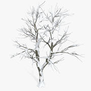 Snow Plain Defoliated Tree 3d model