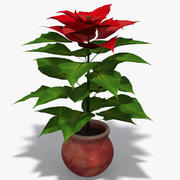 Poinsettia 3d model