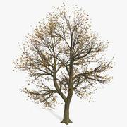 Fogliame parzialmente calvo dell'albero di autunno 3d model