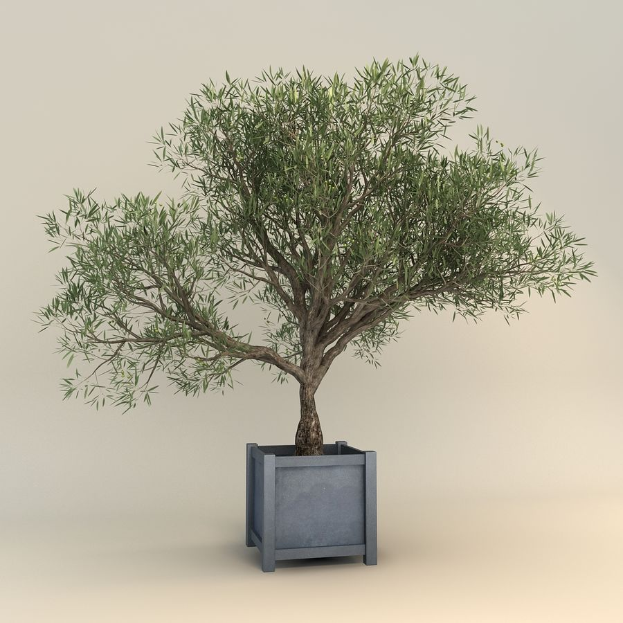 Olijfboom royalty-free 3d model - Preview no. 1