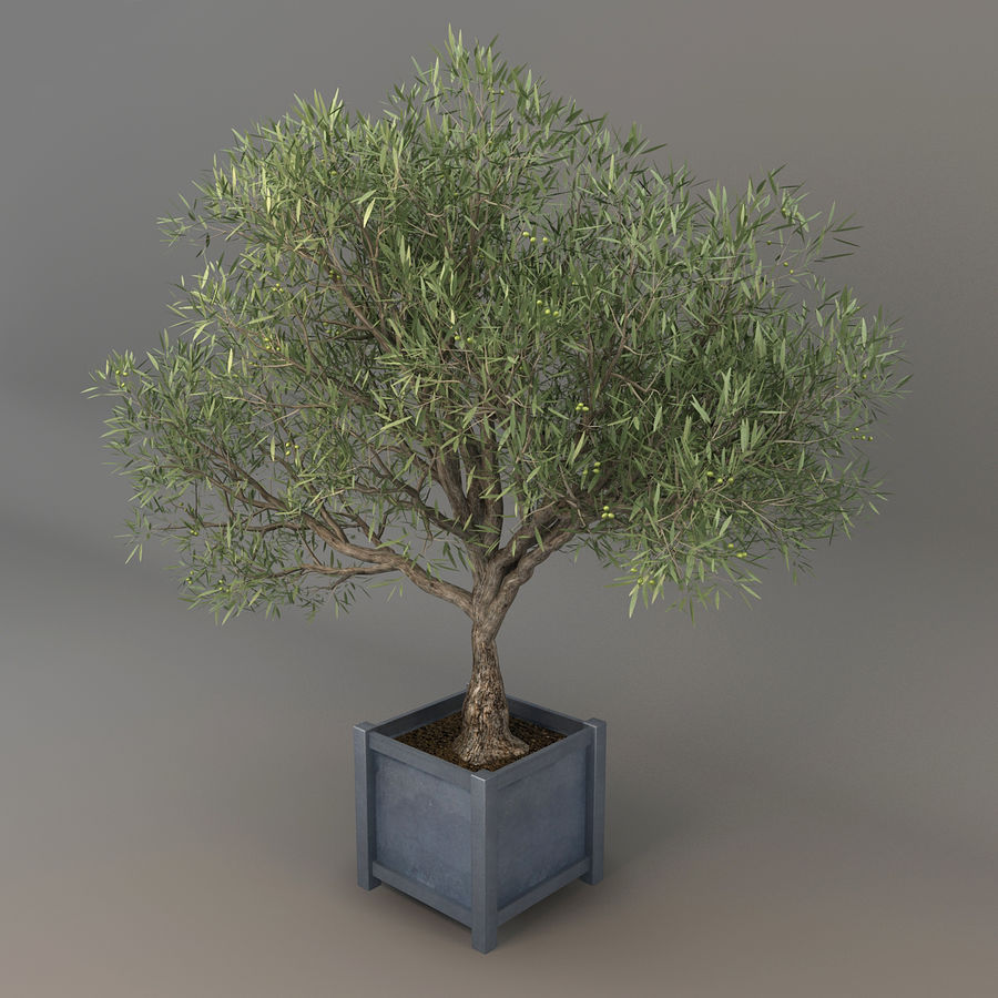 Olijfboom royalty-free 3d model - Preview no. 4