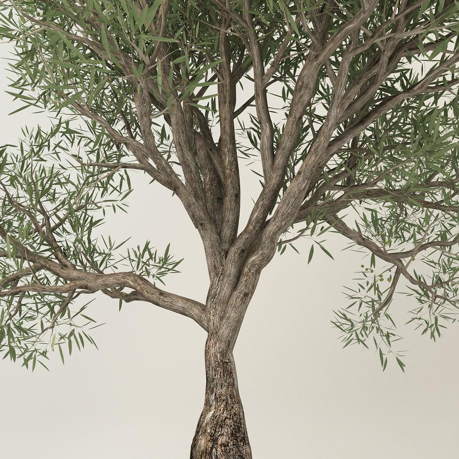 Olijfboom royalty-free 3d model - Preview no. 7