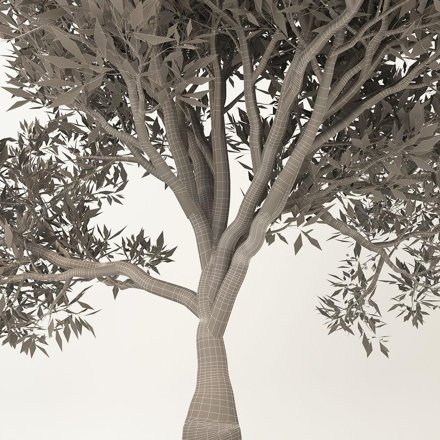 Olijfboom royalty-free 3d model - Preview no. 10