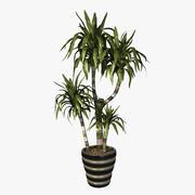 Plante d'intérieur Dracaena Lisa Canne 3d model