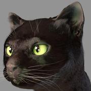 머리 고양이 3d model