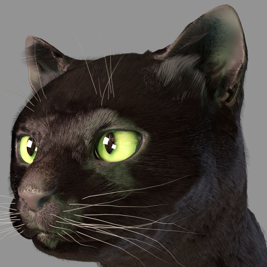 HEAD CAT royalty-free 3d model - Preview no. 1