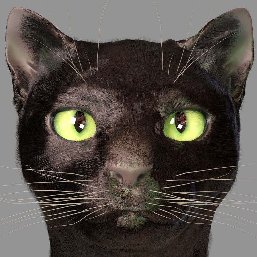 HEAD CAT royalty-free 3d model - Preview no. 2
