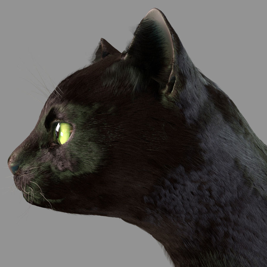 HEAD CAT royalty-free 3d model - Preview no. 3