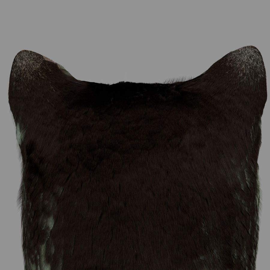 HEAD CAT royalty-free 3d model - Preview no. 4