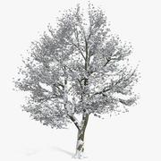 Заснеженное зимнее дерево с листьями 3d model