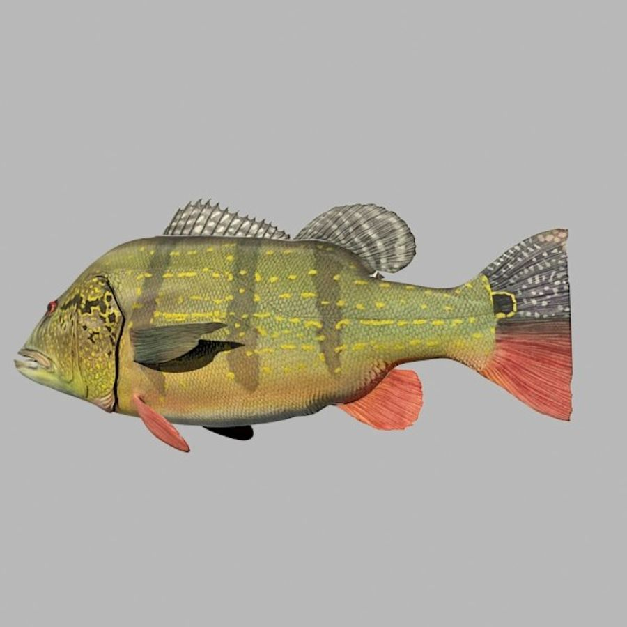 Speckled Peacock Bass royalty-free 3d model - Preview no. 8