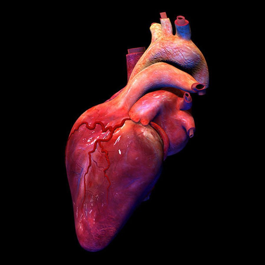Heart Pro Hareketli Dokulu royalty-free 3d model - Preview no. 5
