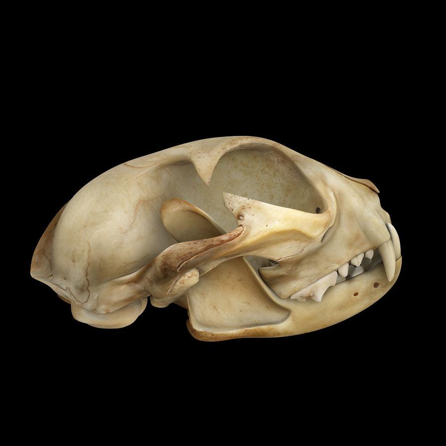 Cat Skull royalty-free 3d model - Preview no. 4