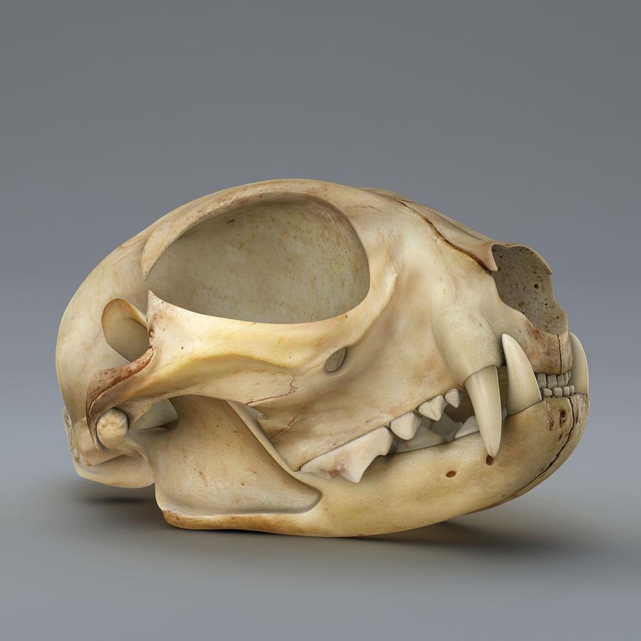 Cat Skull royalty-free 3d model - Preview no. 1