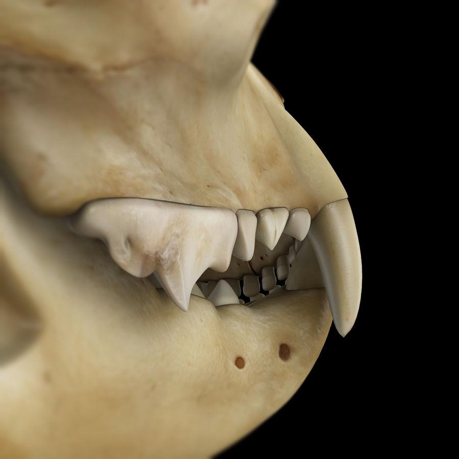 Cat Skull royalty-free 3d model - Preview no. 8