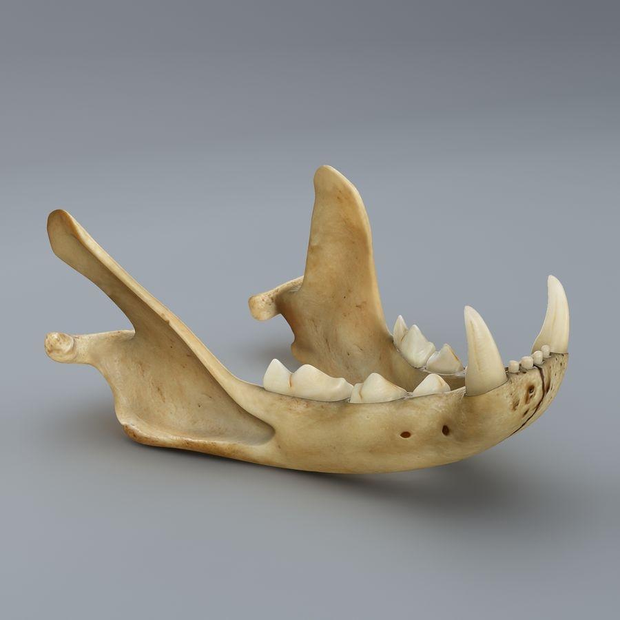Cat Skull royalty-free 3d model - Preview no. 2