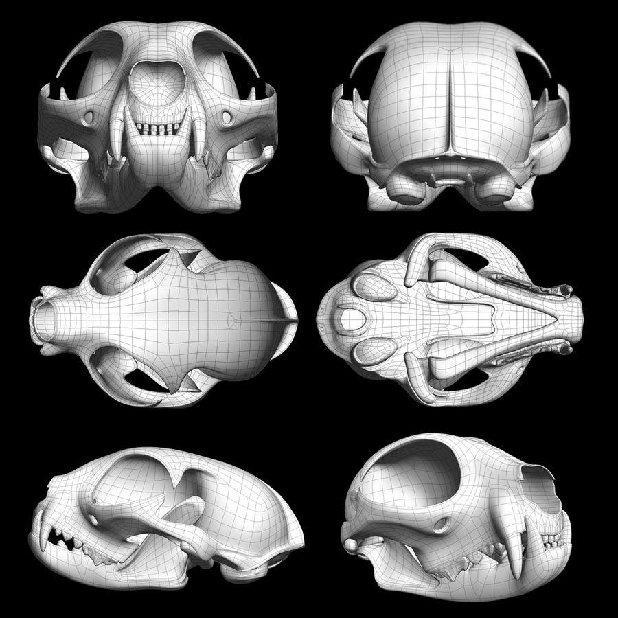 Cat Skull royalty-free 3d model - Preview no. 14