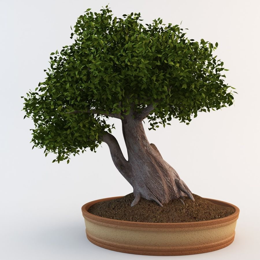 Bonsai Agaci 5 3d Model 99 C4d Max Obj 3ds Free3d