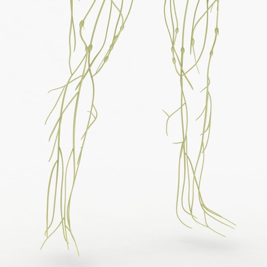 Humant lymfatiskt system royalty-free 3d model - Preview no. 5