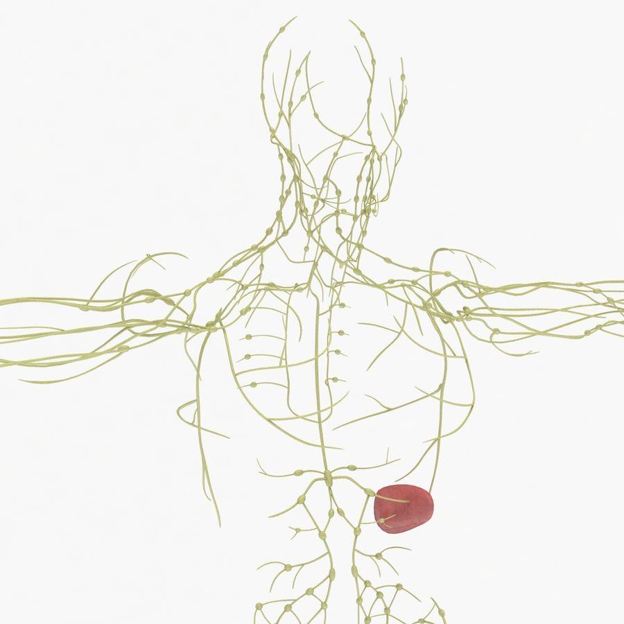 Humant lymfatiskt system royalty-free 3d model - Preview no. 3