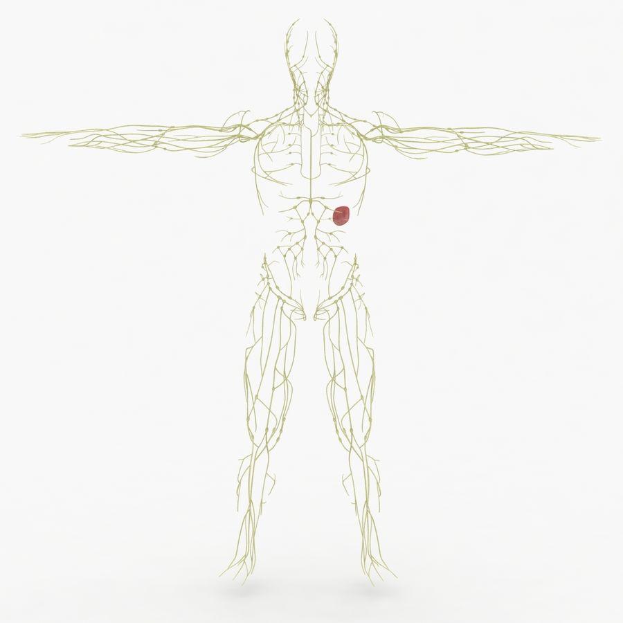 Humant lymfatiskt system royalty-free 3d model - Preview no. 2