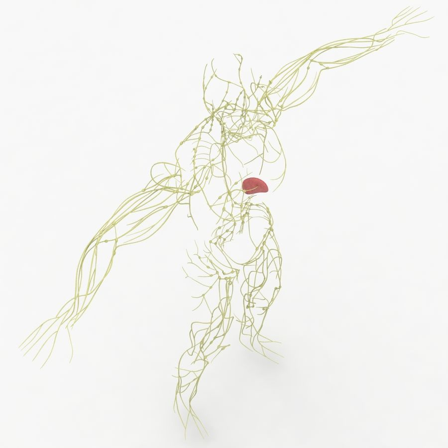 Humant lymfatiskt system royalty-free 3d model - Preview no. 6