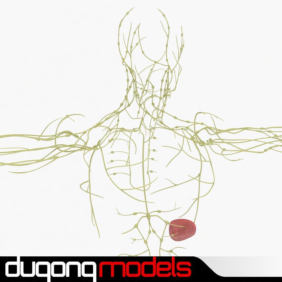 Humant lymfatiskt system royalty-free 3d model - Preview no. 1
