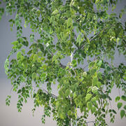 ArchTrees白桦树(B) 3d model