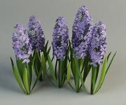hyacinth hyacinthus flower 3d model