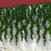 Wall Hanging Plant Ivy - K 3d model