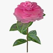 Camellia Plant 3d model