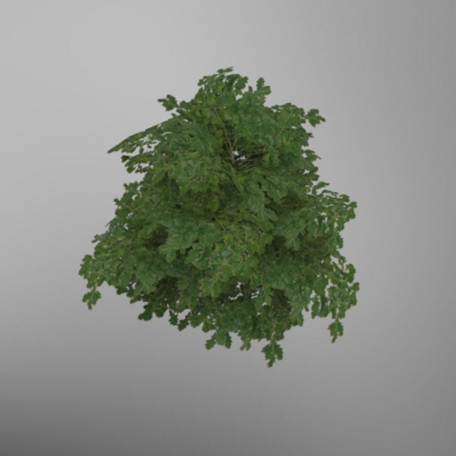 Buisson royalty-free 3d model - Preview no. 4