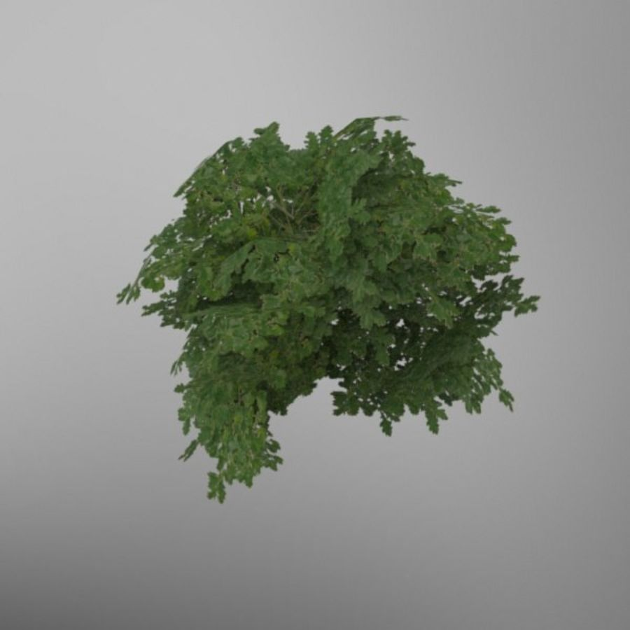 Buisson royalty-free 3d model - Preview no. 3