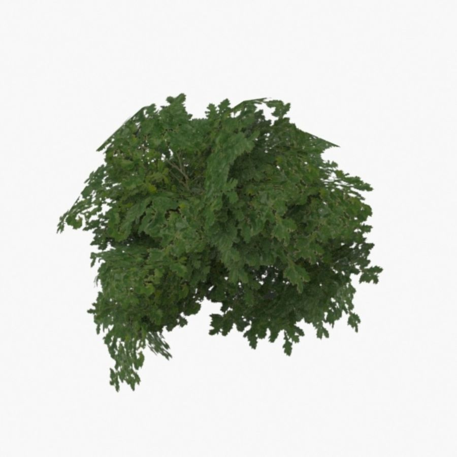 Buisson royalty-free 3d model - Preview no. 1
