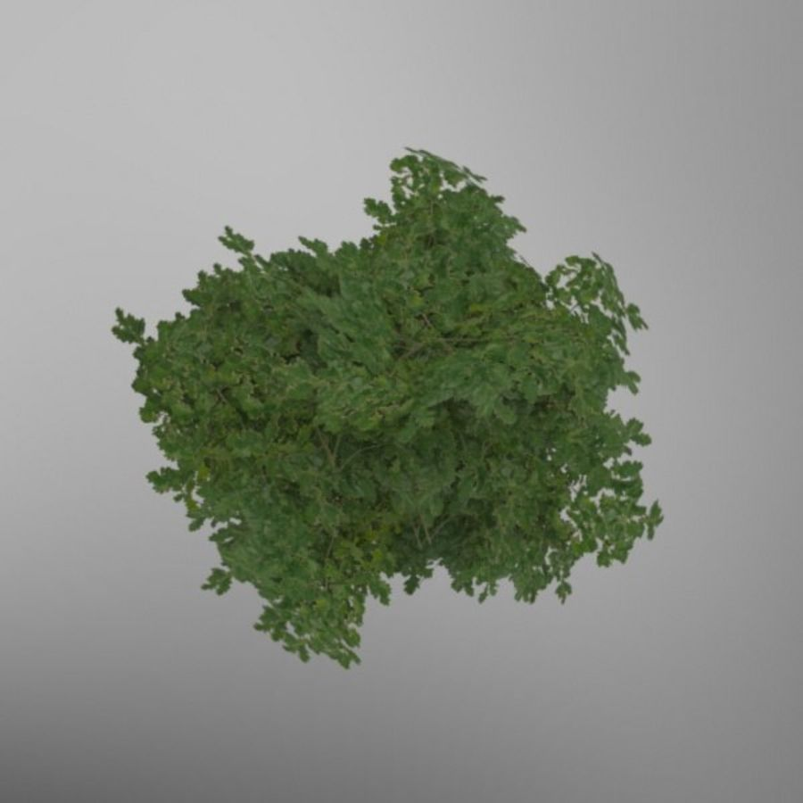 Buisson royalty-free 3d model - Preview no. 5