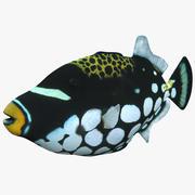 Clown Trigger Fish 3d model