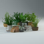 Spice Herbs 3d model