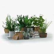 Spice Herbs 3d model