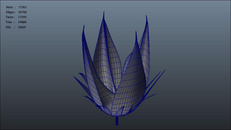 Gossypium herbaceum_ (Bawełna) royalty-free 3d model - Preview no. 7