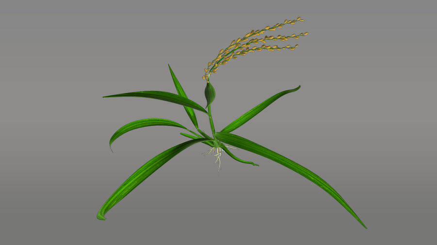 Fibrous root system royalty-free 3d model - Preview no. 3
