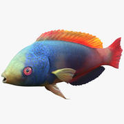 Wrasse Fish 3d model