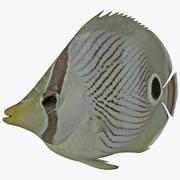 Kelebek balığı 3d model