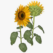 Sunflower 2 3d model