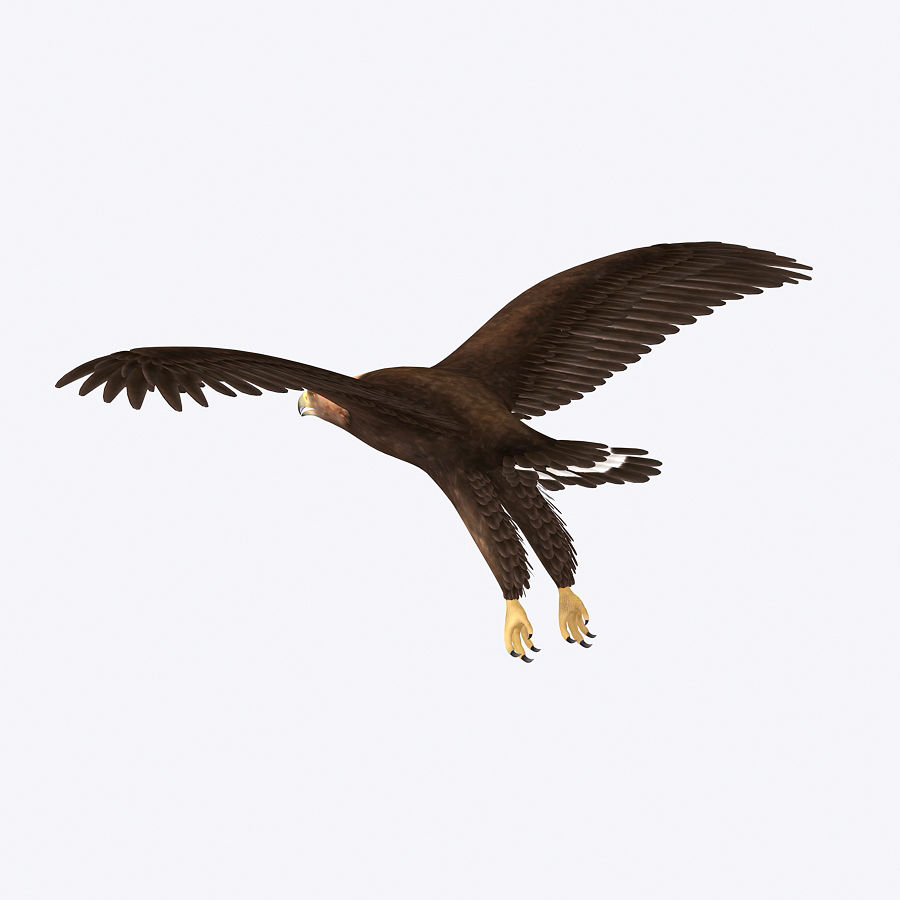 Steinadler royalty-free 3d model - Preview no. 3