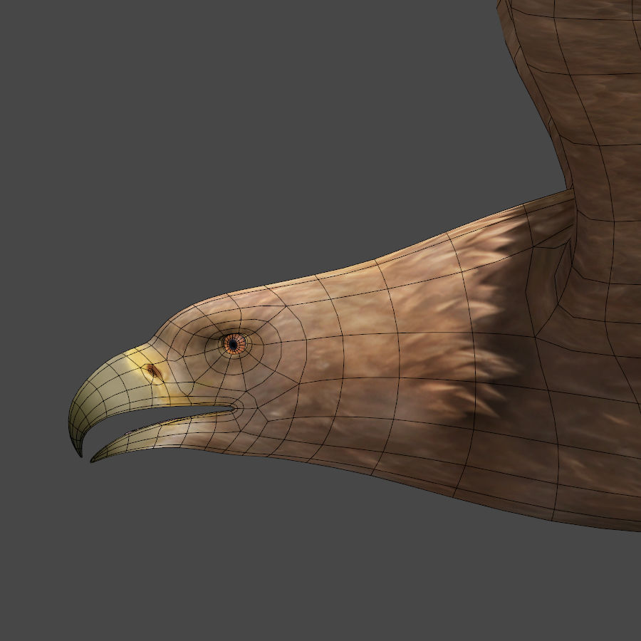 Steinadler royalty-free 3d model - Preview no. 7
