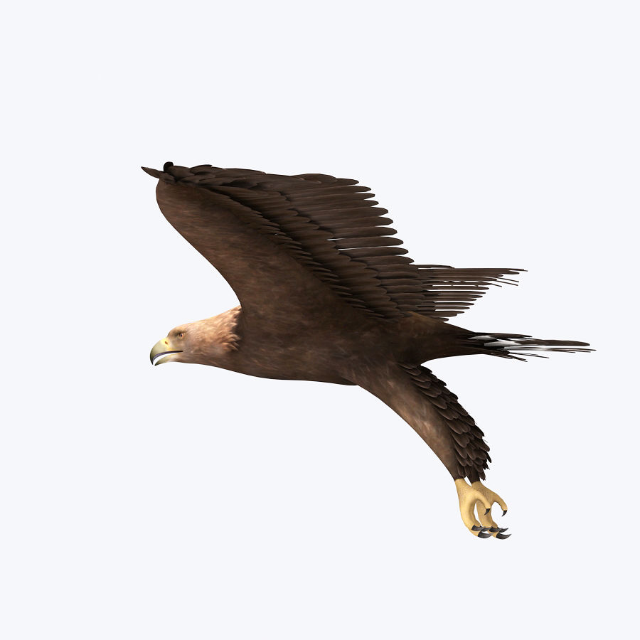 Steinadler royalty-free 3d model - Preview no. 2