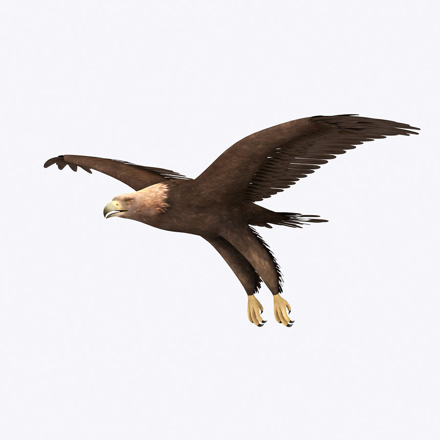 Steinadler royalty-free 3d model - Preview no. 1