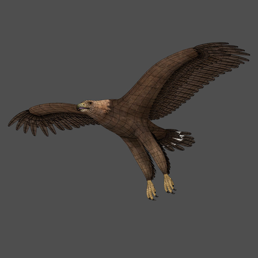 Steinadler royalty-free 3d model - Preview no. 6