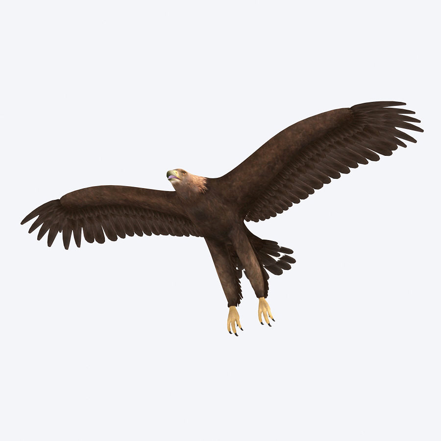 Steinadler royalty-free 3d model - Preview no. 5